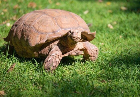 Unsere Nachmittagsbetreuung in der Grundschule: die Schildkröten stellen sich vor!
