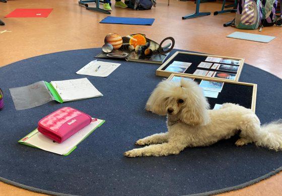 Unser wuscheliges Montessori Hunde Trio - Dr. Pixel, Muffin und Kimi